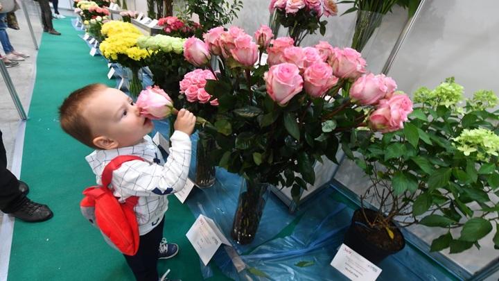 Губительная роза, живительная туя: как сохранить букет свежим
