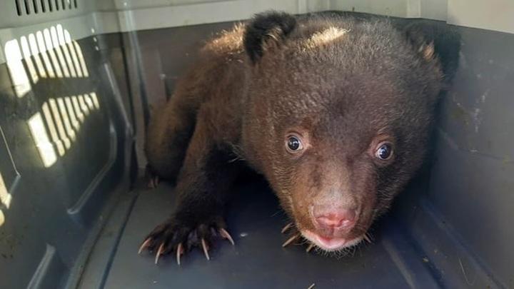 В Приморском крае у дороги найден медвежонок