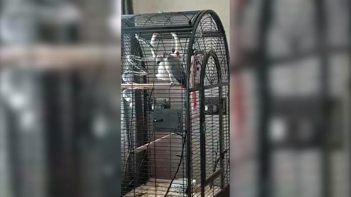 В тверском монастыре живет попугай, который умеет молиться