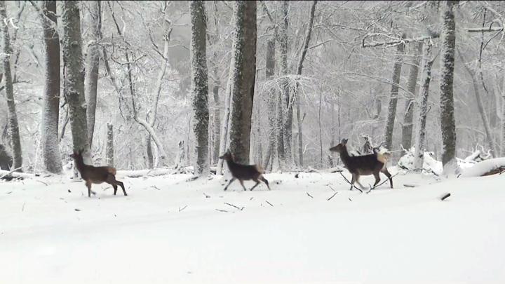 Журналисты узнали, как дикие звери Крыма пережили зиму. Эксклюзивное видео