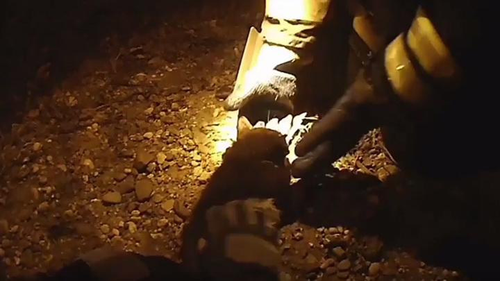 На Амуре пожарные реанимировали кота, едва не погибшего на пожаре
