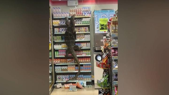Крупный варан распугал посетителей магазина в Таиланде