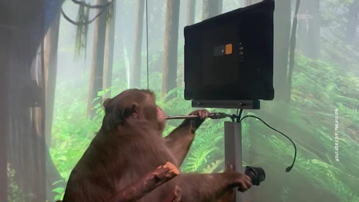 Компания Илона Маска выпустила видео с обезьяной-киборгом