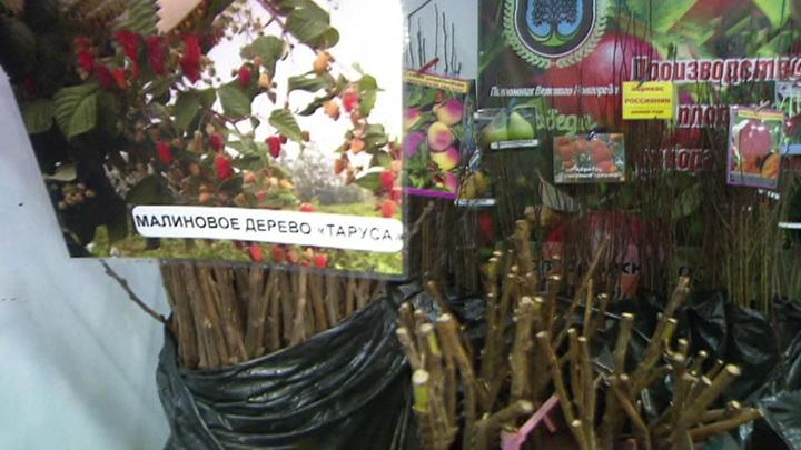 Садоводам нужна осторожность: мошенники открыли свой дачный сезон