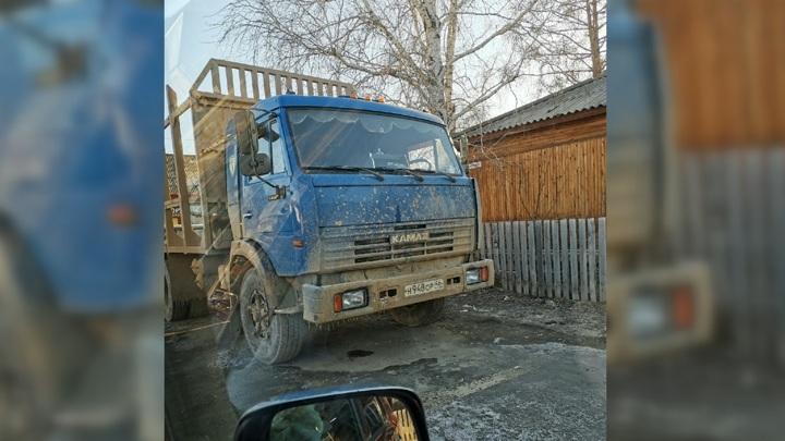 Браконьер застрелил домашнего лося в Красноярском крае