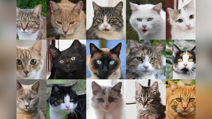 Нейросеть научилась генерировать несуществующих котиков