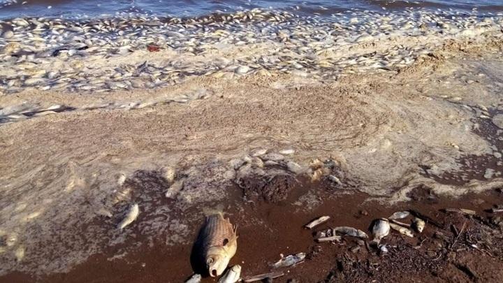 Зимний замор мог стать причиной массовой гибели рыбы в Оренбургской области
