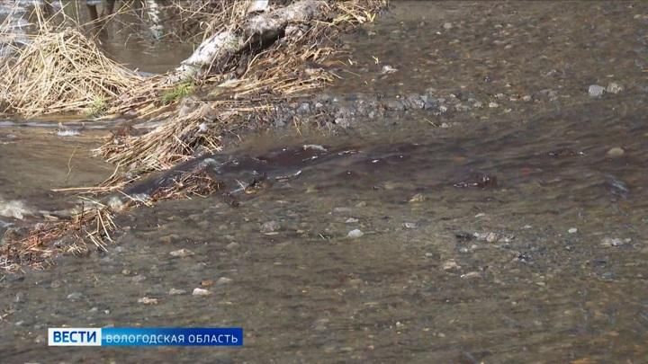 Половодье размыло ряд важных дорог в Череповецком районе