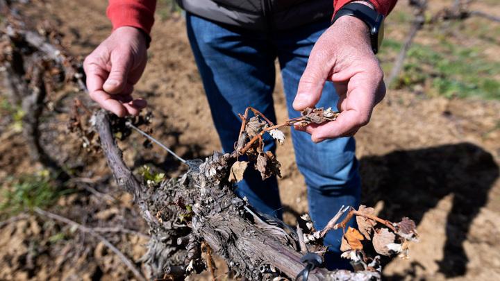 Франция выделит миллиард евро для пострадавших от сельхозкатастрофы