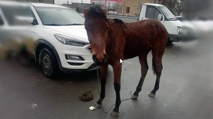 На Ставрополье волонтеры нашли хозяина потерявшегося жеребенка