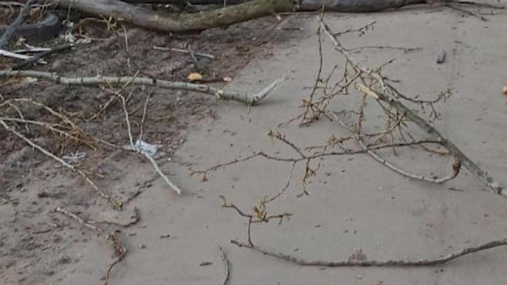 В Рязани на пенсионерку упало дерево