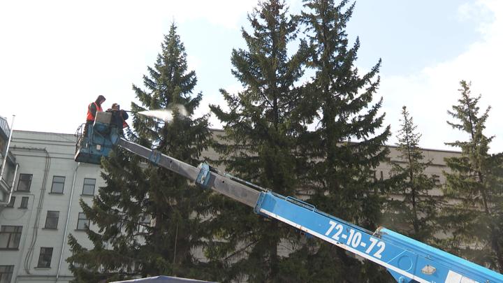 В Иркутске после зимнего сезона приступили к мытью хвойных деревьев