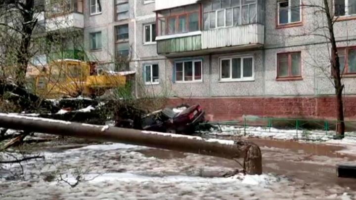 Снегопад и ветер привели к падению около 80 деревьев в Тульской области