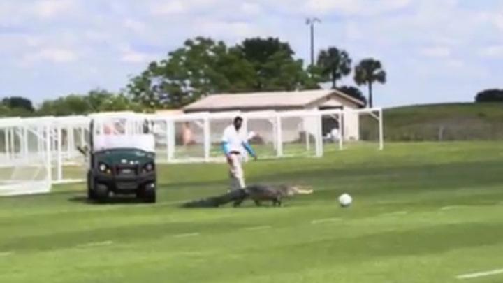 Огромный аллигатор прервал тренировку канадских футболистов
