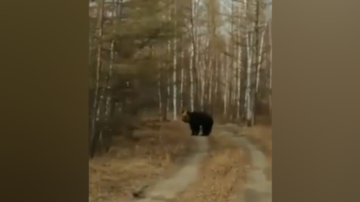 Под Хабаровском местные жители встретили у трассы медведя