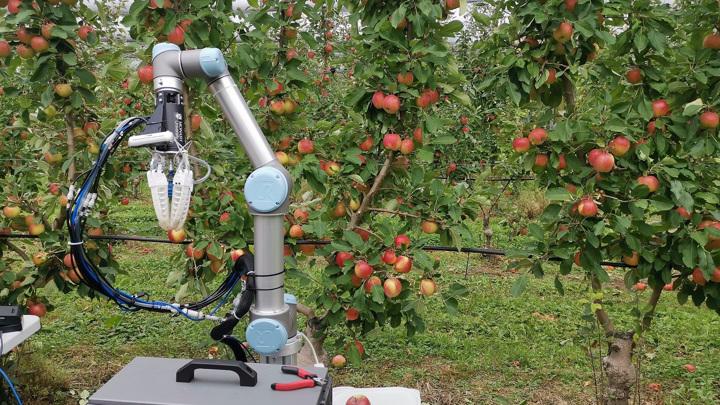Робот, самостоятельно собирающий яблоки, успешно прошёл полевые испытания.