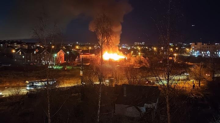 В Твери в доме зоозащитницы заживо сгорели пять кошек