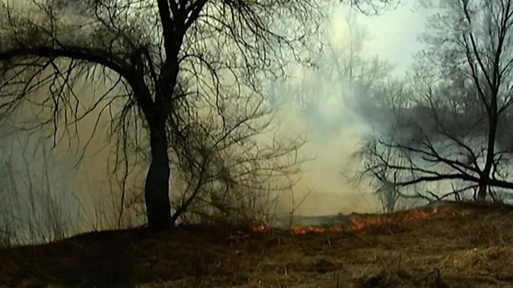 Регионы России страдают от лесных пожаров