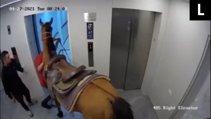 Двое мужчин решили прокатить лошадь на лифте в небоскребе