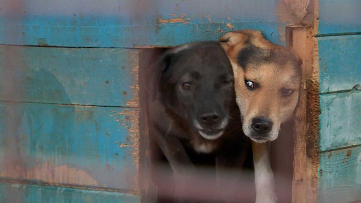Для бездомных кошек и собак в Костроме купили два гектара земли