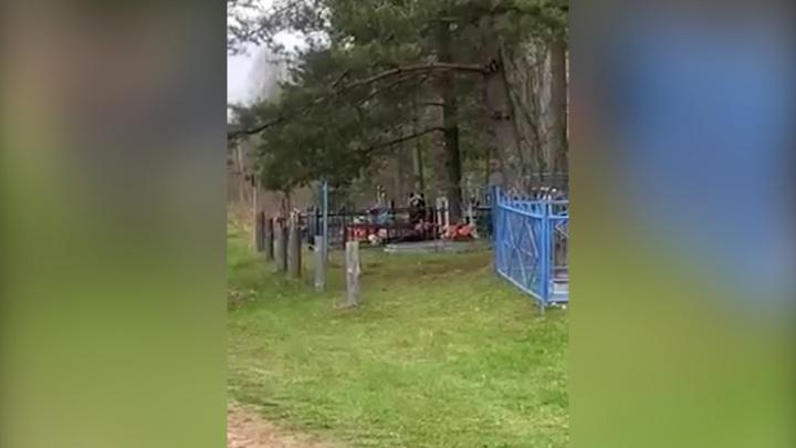 Пир на кладбище: в Смоленской области медведей заметили рядом с могилами