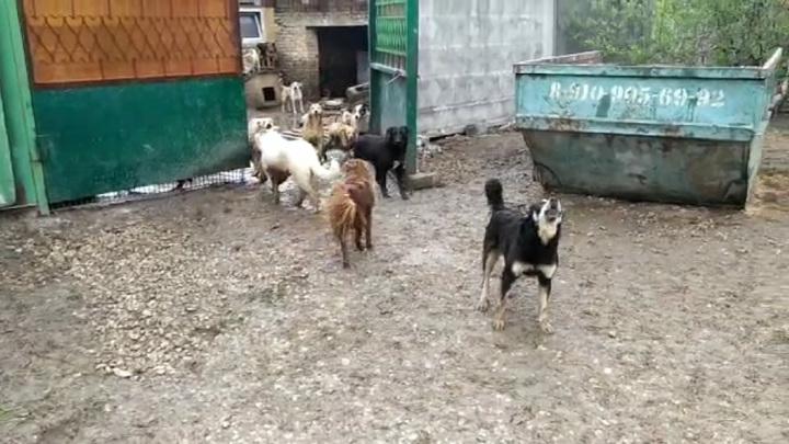 Сотни собак сбежали из рязанского приюта