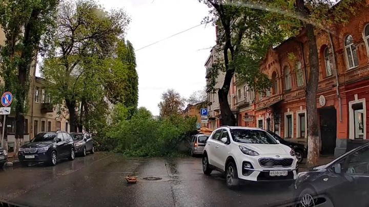 Дерево рухнуло на машины и перегородило улицу в Саратове. Видео