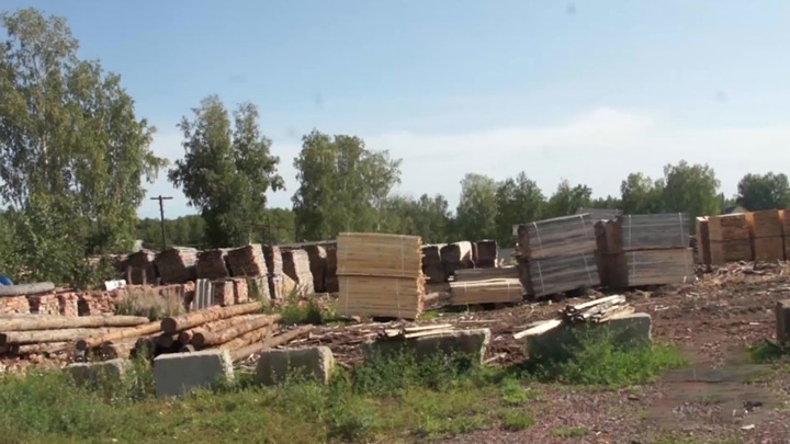 Вырубка леса в Красноярском крае: ущерб превысил 110 млн рублей
