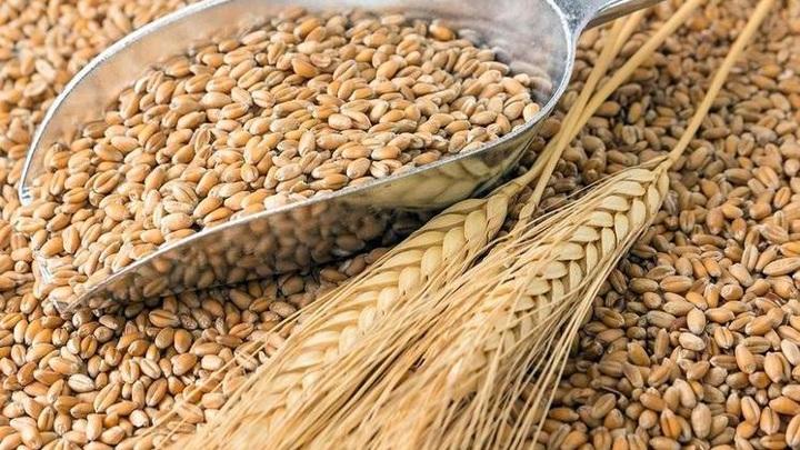 Почти 250 тысяч тонн новосибирского зерна экспортировали с начала 2021 года