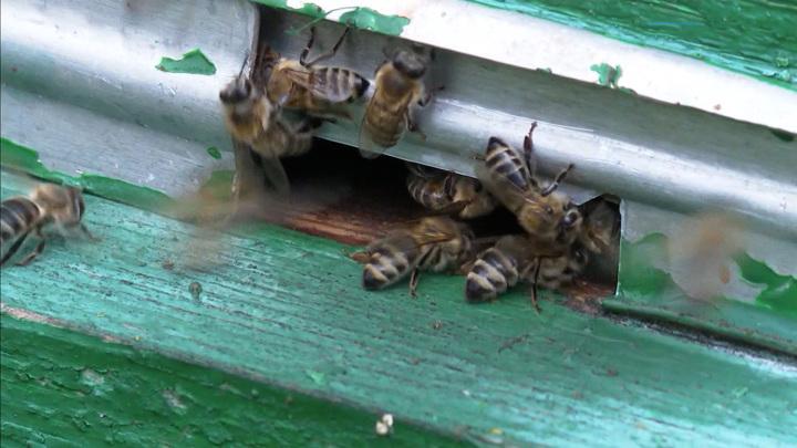 """""""На выселение"""": в Новороссийске спасатели эвакуировали пчел"""