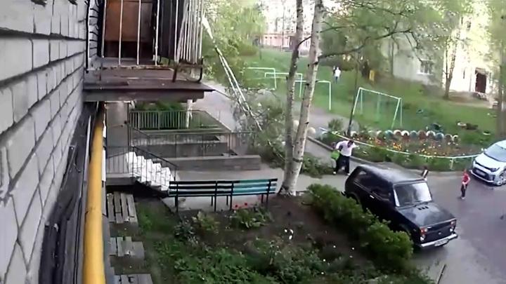 В Петрозаводске на женщину упала береза