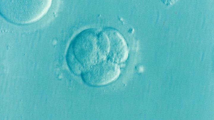 Примерно через три недели после оплодотворения у эмбриона формируется нервная трубка - предшественник мозга.