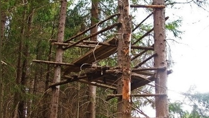Тарзан уже не тот: мужчину поймали на дереве в Амурской области