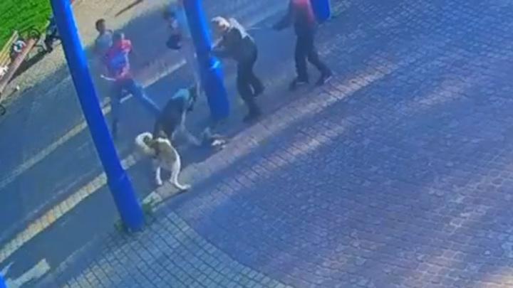 В окрестностях Петербурга алабай убил маленькую собаку. Видео