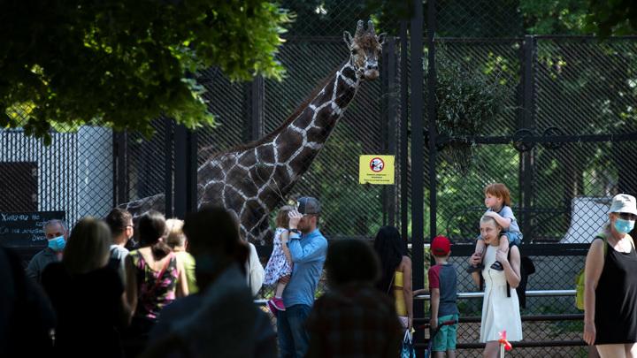 Московский зоопарк закроют