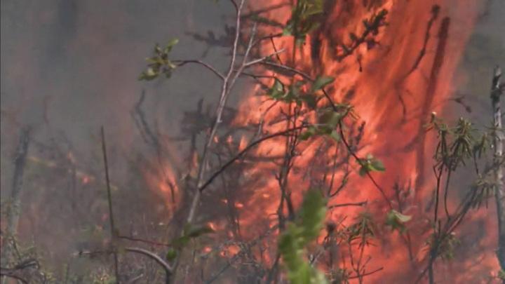 Виновник пожара в Гороховском лесничестве получил 200 часов обязательных работ