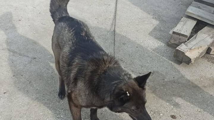 """""""Выживший"""": в Новосибирске нашли собаку, пропавшую во время взрыва на АЗС"""