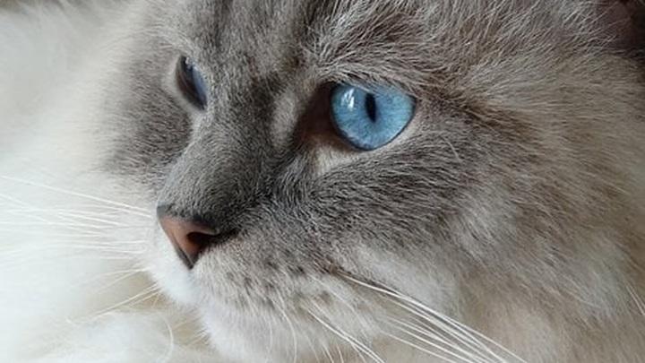 Жительница Ярославля приобрела фантомного котенка за 8 тысяч рублей