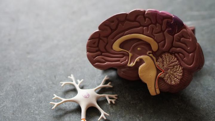 Университет им. Пирогова: коронавирус может запустить болезнь Альцгеймера