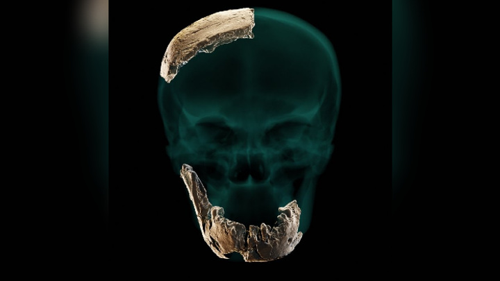 Компьютерная реконструкция черепа человека из Нешер Рамла.