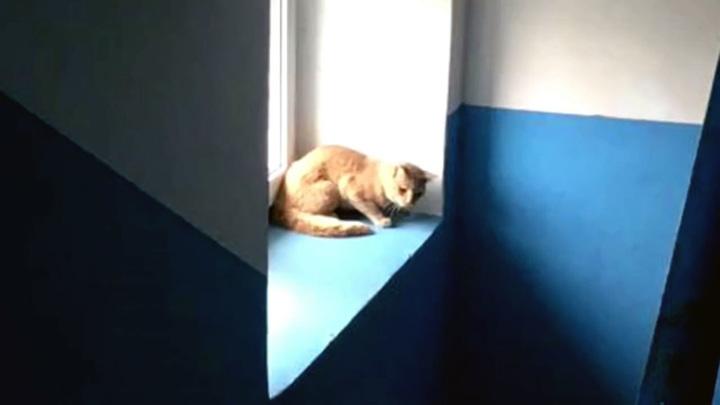 """Шипела и царапалась"": спасатели вызволили из электрощитка кошку-сибирячку"