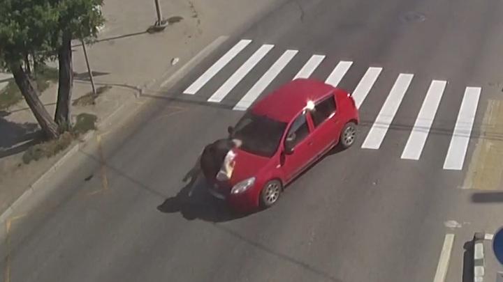Не заметила: женщина на легковушке сбила пенсионерку в Волгограде