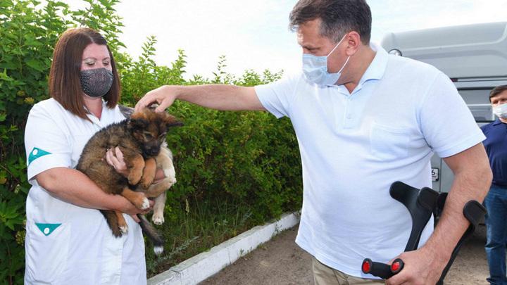 Метшин: Казань должна стать городом без брошенных животных