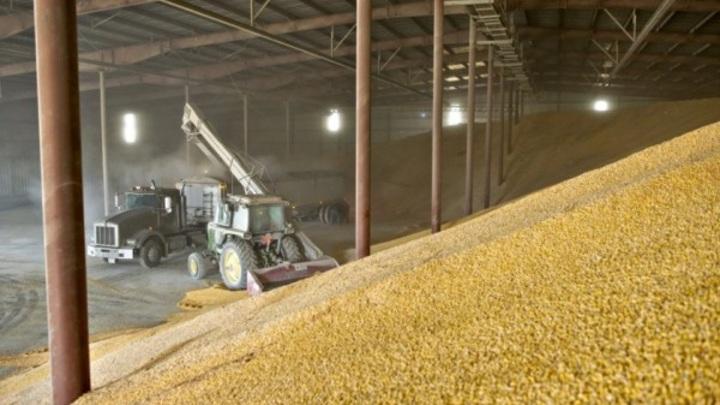Почти 2 миллиона тонн зерна нового урожая собрали на Ставрополье