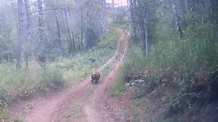 Сотрудники нацпарка напугали медведицу с медвежатами. Видео