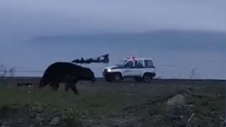 Медведь разгуливал по поселку на глазах изумленных сахалинцев