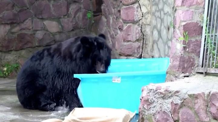 Ванна карпов и ледяной торт: Московский зоопарк придумывает способы охлаждения