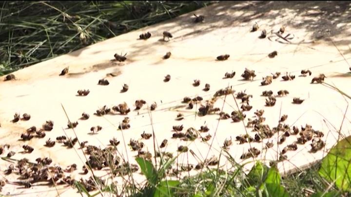 Эксперты назвали одну из причин массового мора пчел в Башкирии