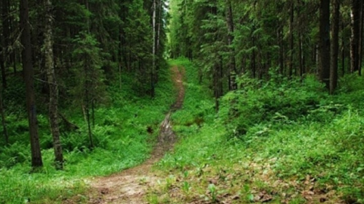 Архангельские леса хранят мины времен Первой мировой войны