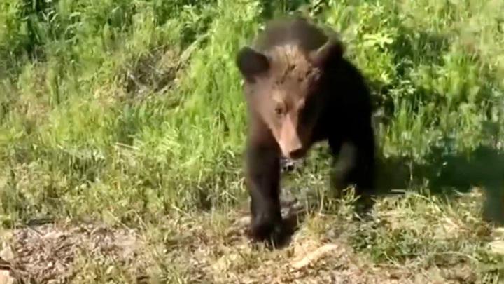 """Медведь напал на группу туристов в природном парке """"Ергаки"""""""